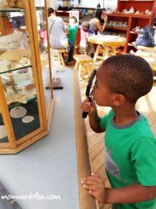 Kid Exploring Shells